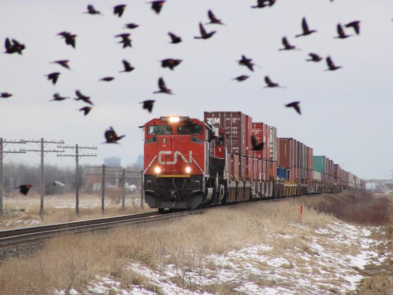 CN 8000 and birds