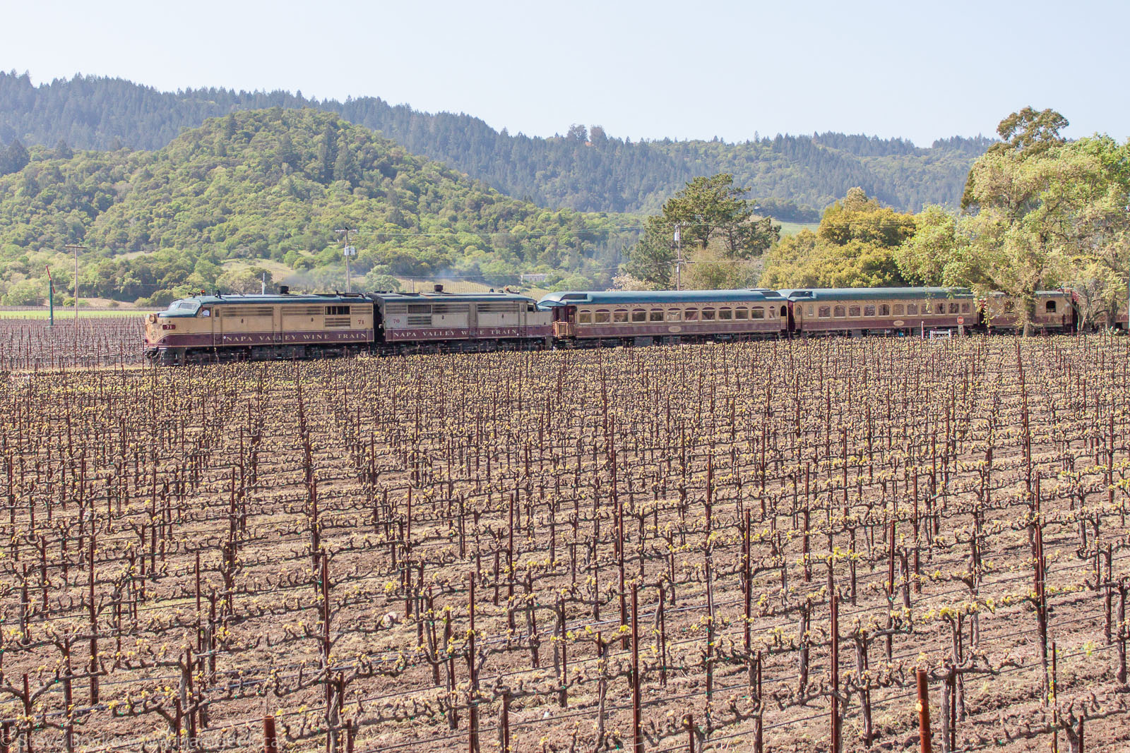 The Napa Valley Wine Train across a field of grapes