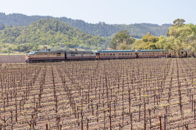 Napa Valley Wine Train in a vineyard