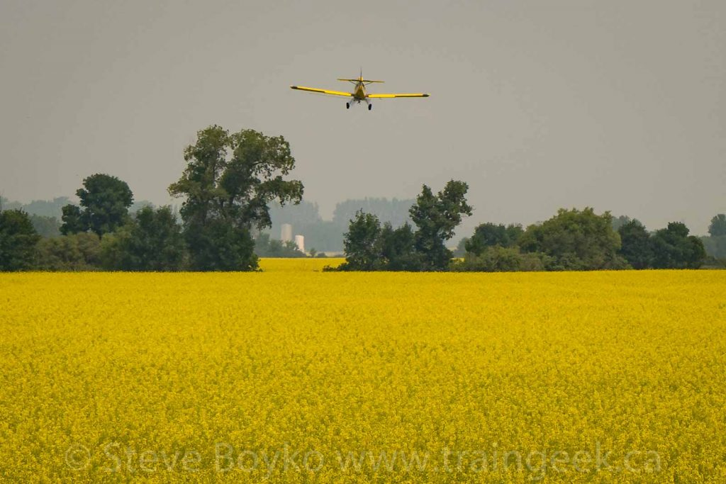 Spray plane and canola