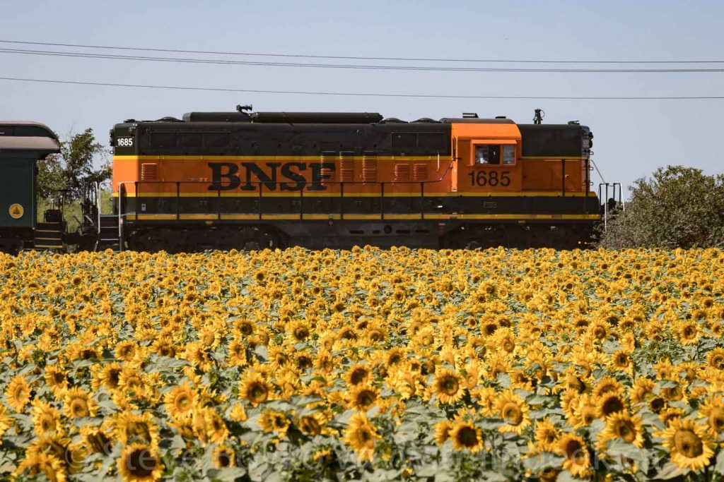 BNSF 1685 and sunflowers