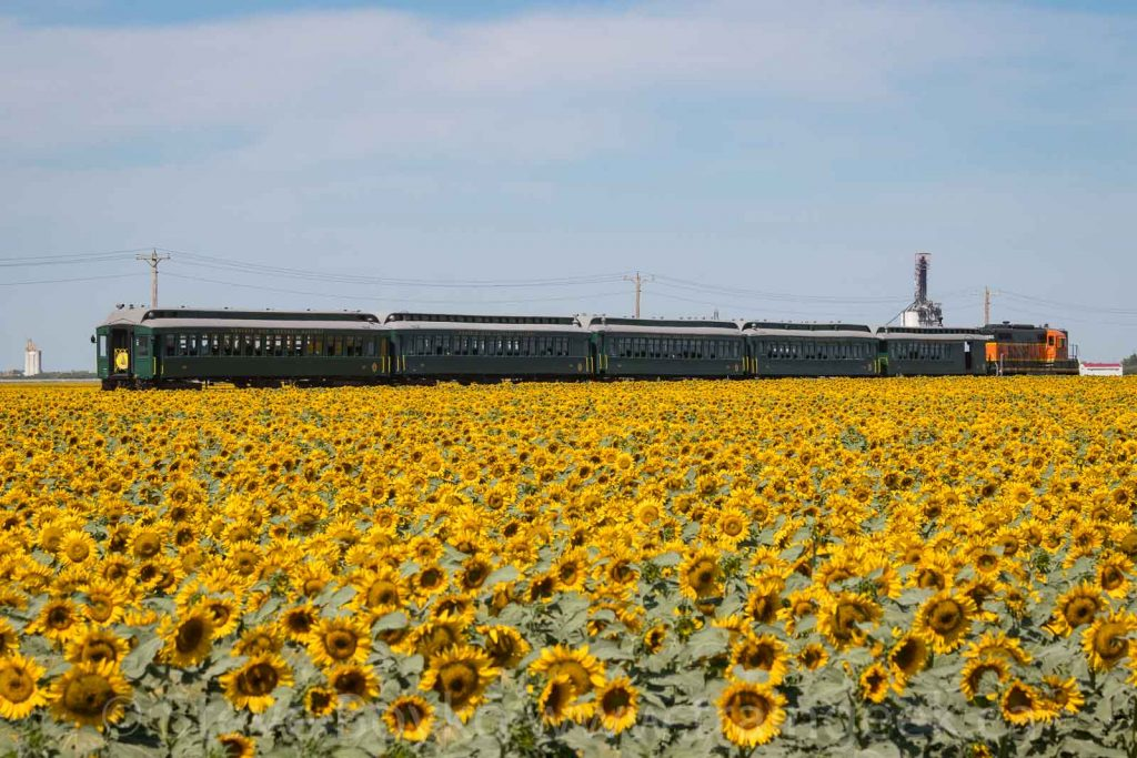 The Prairie Dog Central, and sunflowers