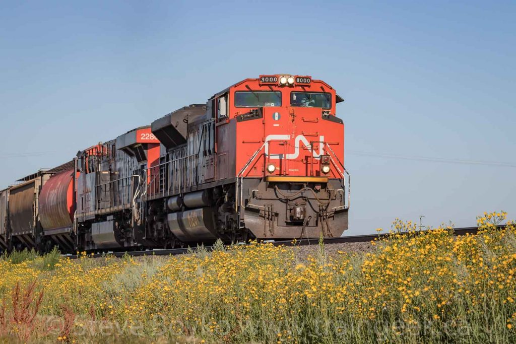 Flowers and CN 8000