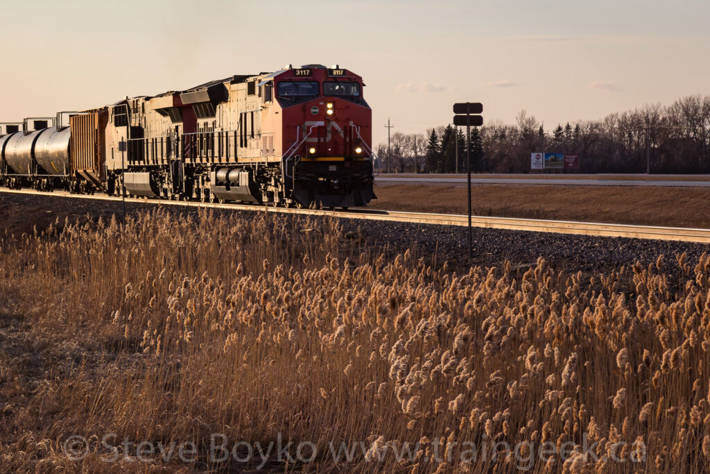 Cattails and oil trains