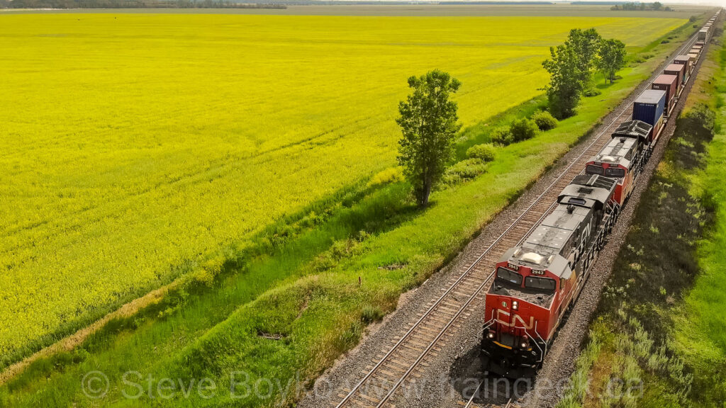 CN 2943 and the canola field